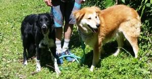 Balto et Roxy