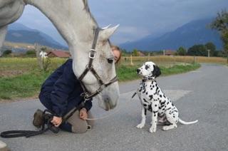 Marcus : rencontre avec un cheval !