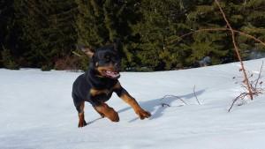 Marvik au ski !