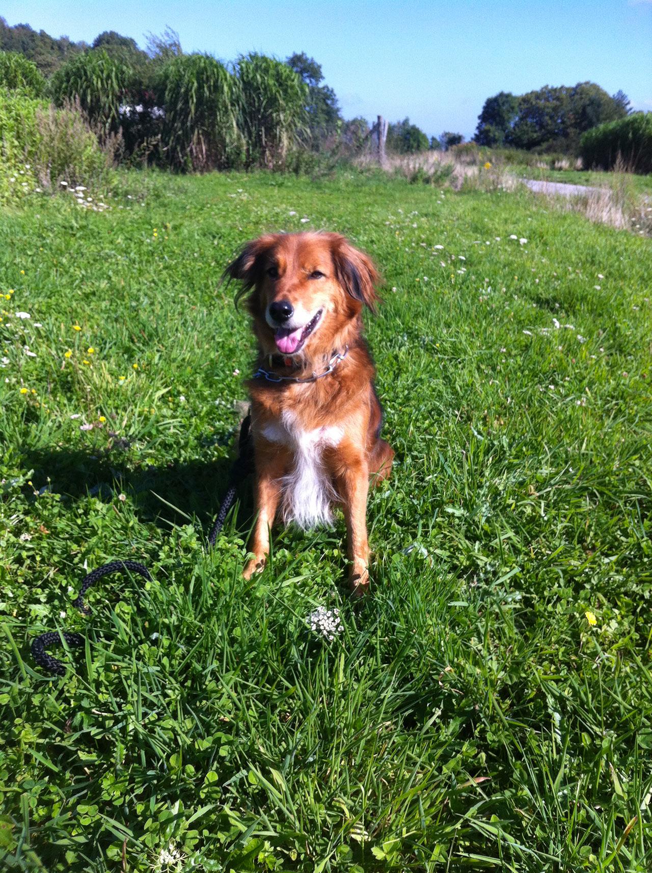 Evaluation gratuite éducateur canin